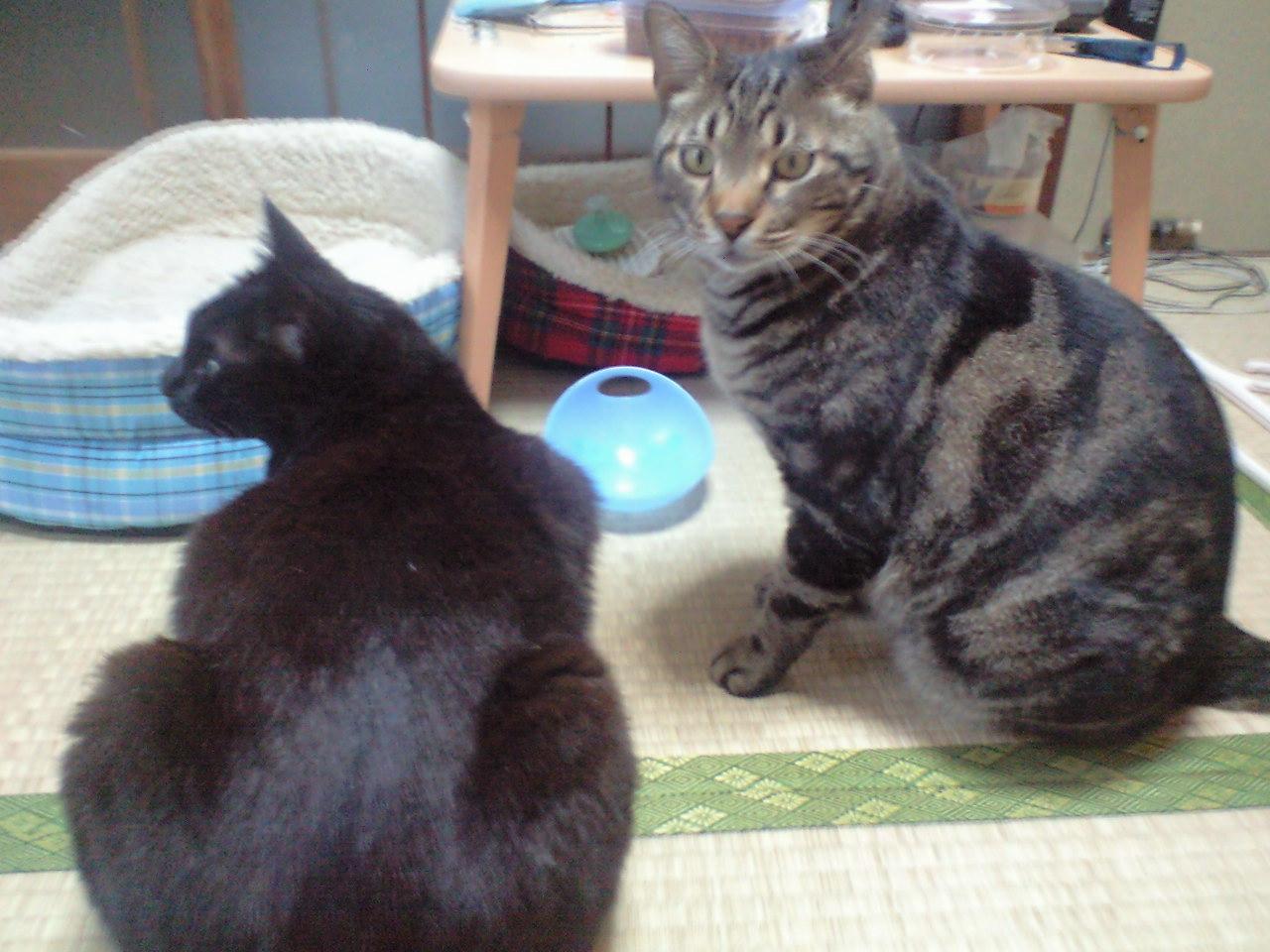 裏の猫達2